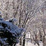 雪は少なめ、気温は低め