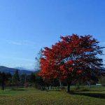 狩勝高原の秋