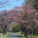 狩勝高原の春
