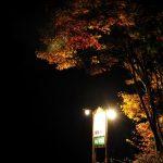 ビーワイルドの看板横の紅葉