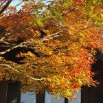 ビーワイルドの秋