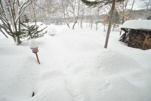 大雪で陸の孤島と化したビーワイルドの駐車場