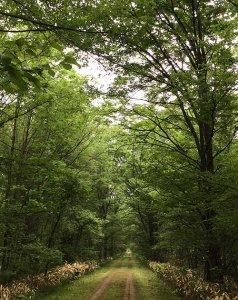初夏早朝のポッポの道